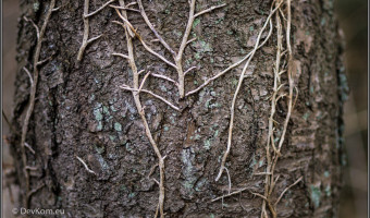 tree bark with moss and dried broken vine stems